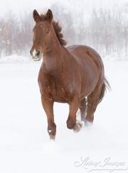 SnowHorses-216