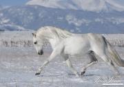 SnowHorses-248
