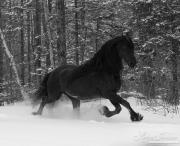 SnowHorses-262