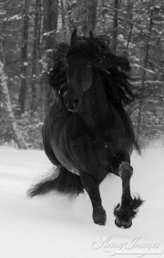 SnowHorses-264