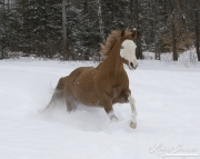 SnowHorses-274