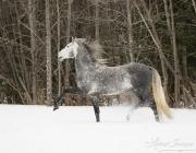 SnowHorses-289