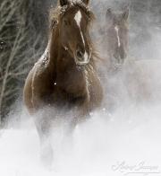 SnowHorses-336