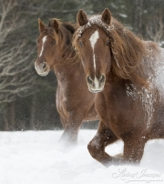 SnowHorses-339