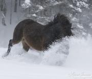 SnowHorses-343