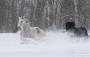 SnowHorses-372