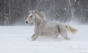 SnowHorses-376