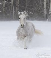 SnowHorses-377