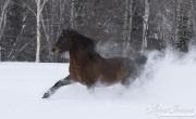 SnowHorses-378