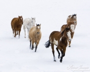 Flitner Ranch, Shell, WY, horses in winter, horses running in v formation in the snow
