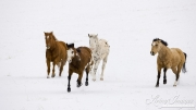 Flitner Ranch, Shell, WY, horses in winter, horses running in snow