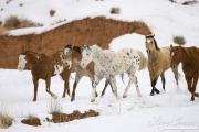 Flitner Ranch, Shell, WY, horses in winter, horses walking together
