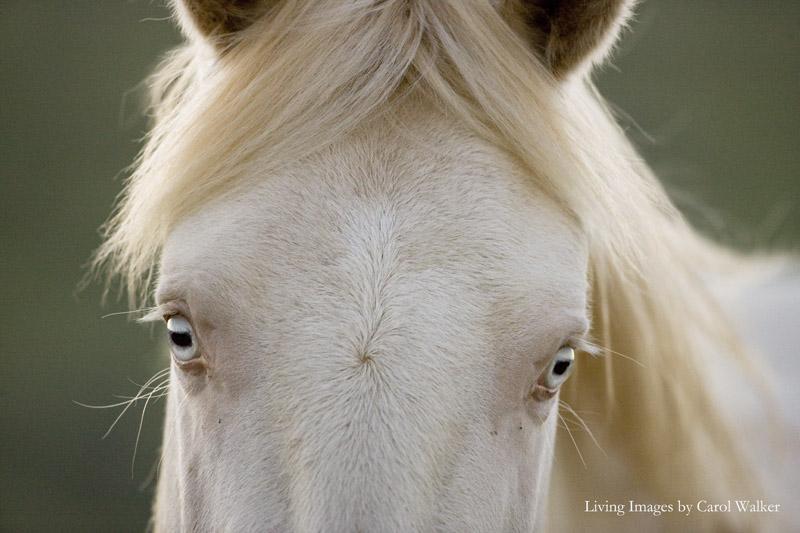 Cremosso's Eyes