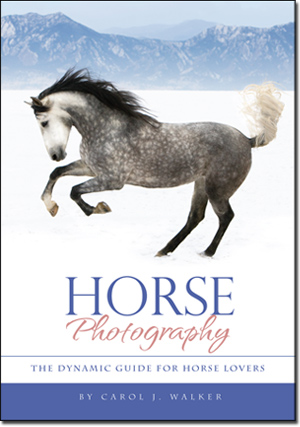 horse-photography-book-cover