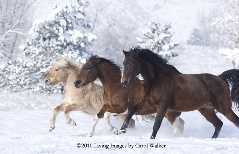Happy New Year Horse Images 27
