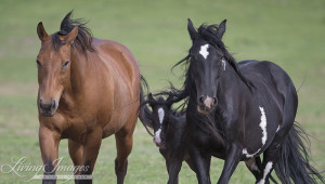 Diamond Girl, her foal and her friend