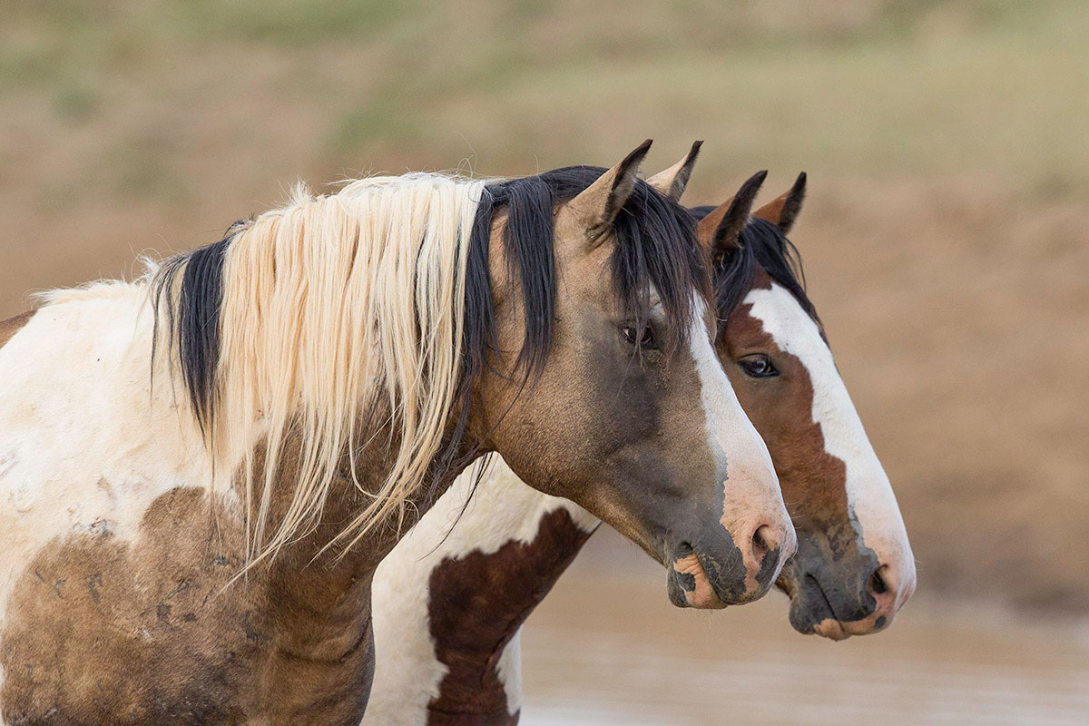 Wild Horse And Horse Fine Art Prints By Carol J Walker Horse Stock Photography Horse And Wild Horse Books And Calendars