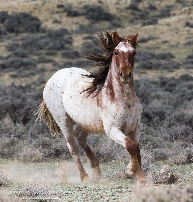 A wild mare in Adobe Town