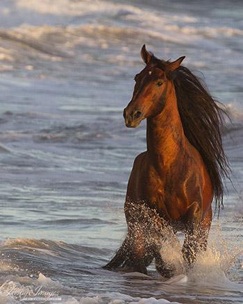 Ocean Horse at Sunset