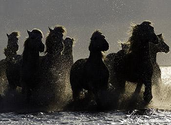 Dark Horses III