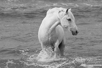 Sea Horse Turns