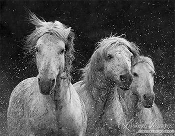 Three White Horses Splash