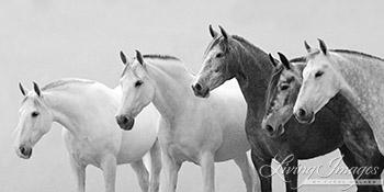 Five Spanish Mares