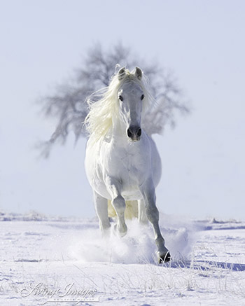 Snow Stallion and the Tree