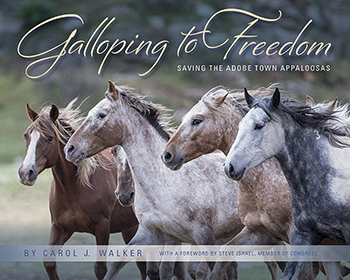 gallopingtofreedomnewsletter