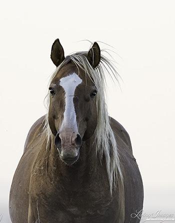 Even the stallion comes close