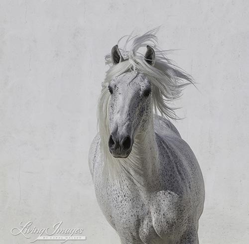 """""""White Stallion Runs Up"""""""
