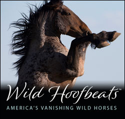 Wild Hoofbeats